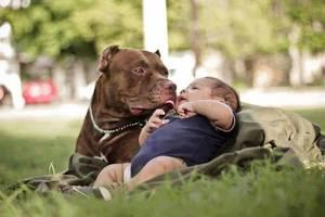 Питбуль играет с ребенком