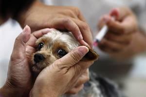 как делают прививки щенкам
