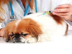 Первая прививка для щенков