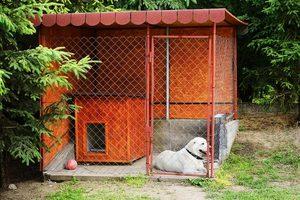 Требования к вольерам для собак