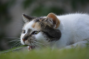 Бешенство у животных - причины, течение и симптомы бешенства