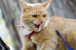 Первые признаки бешенства у кошки