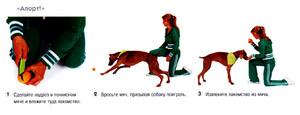 Дрессура собак в домашних условиях