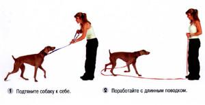 Как приучить собаку
