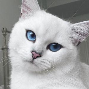 Описание белых кошек