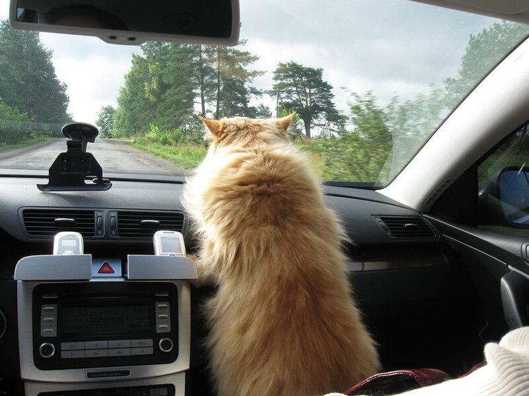нужны поздравления открытка кот в машине карта асбеста