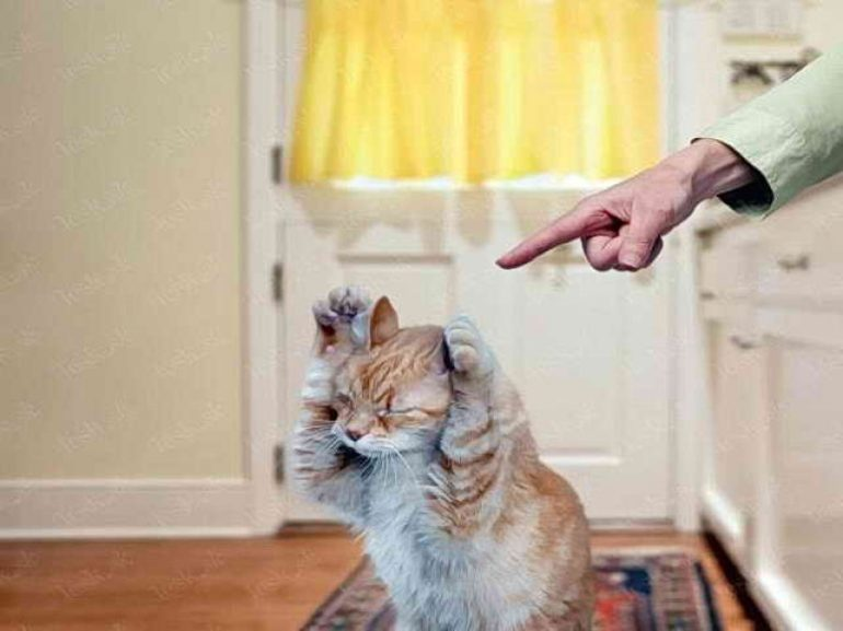 пнуть кота картинки
