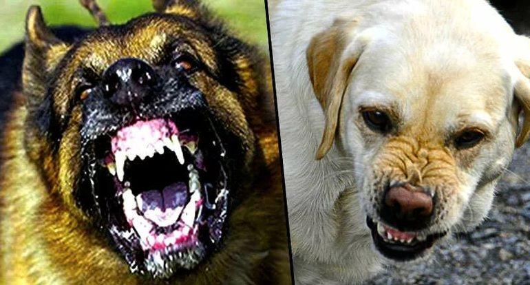 Бешенство у собак в картинках