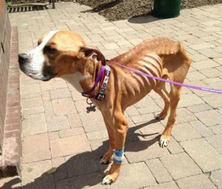Причина Похудения Собак.