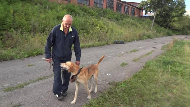 Содержание гончих собак: 7 полезных советов для владельцев