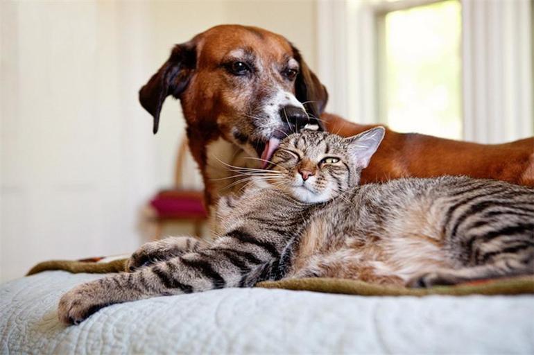 Картинки кошек и собак вместе
