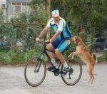 Как отучить собаку преследовать автомобили, велосипедистов и бегунов