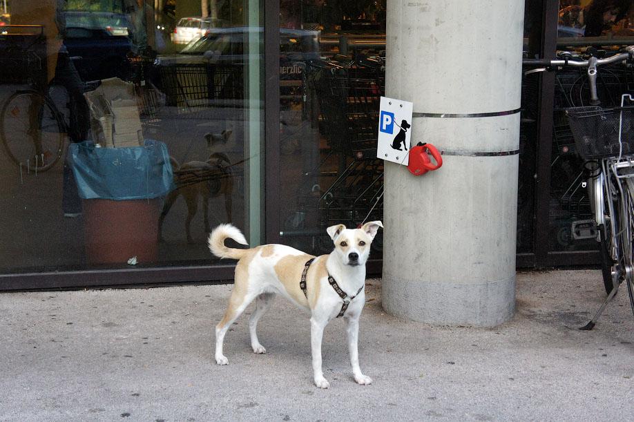 Зачем в Москве нужна парковка для собак