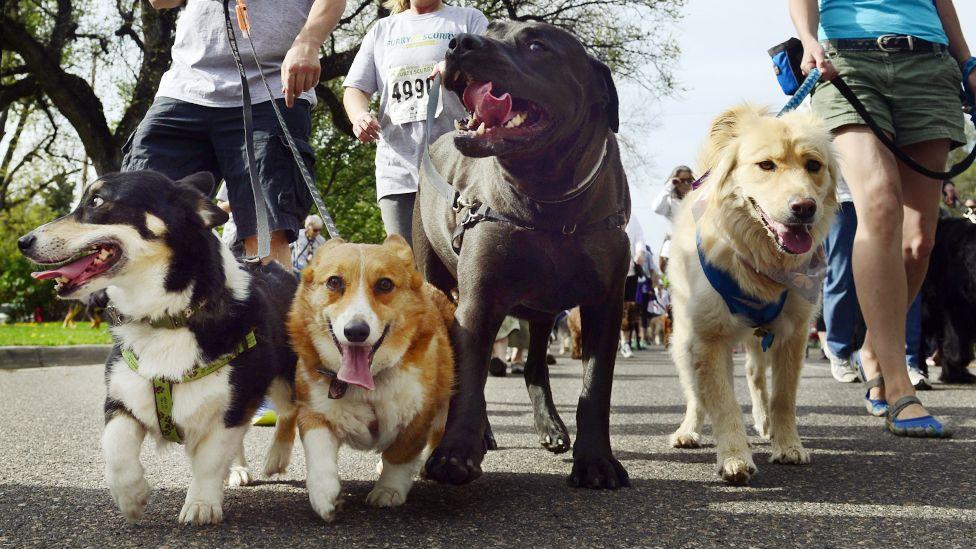 Проблемы содержания породистых и беспородных собак: коротко о главном