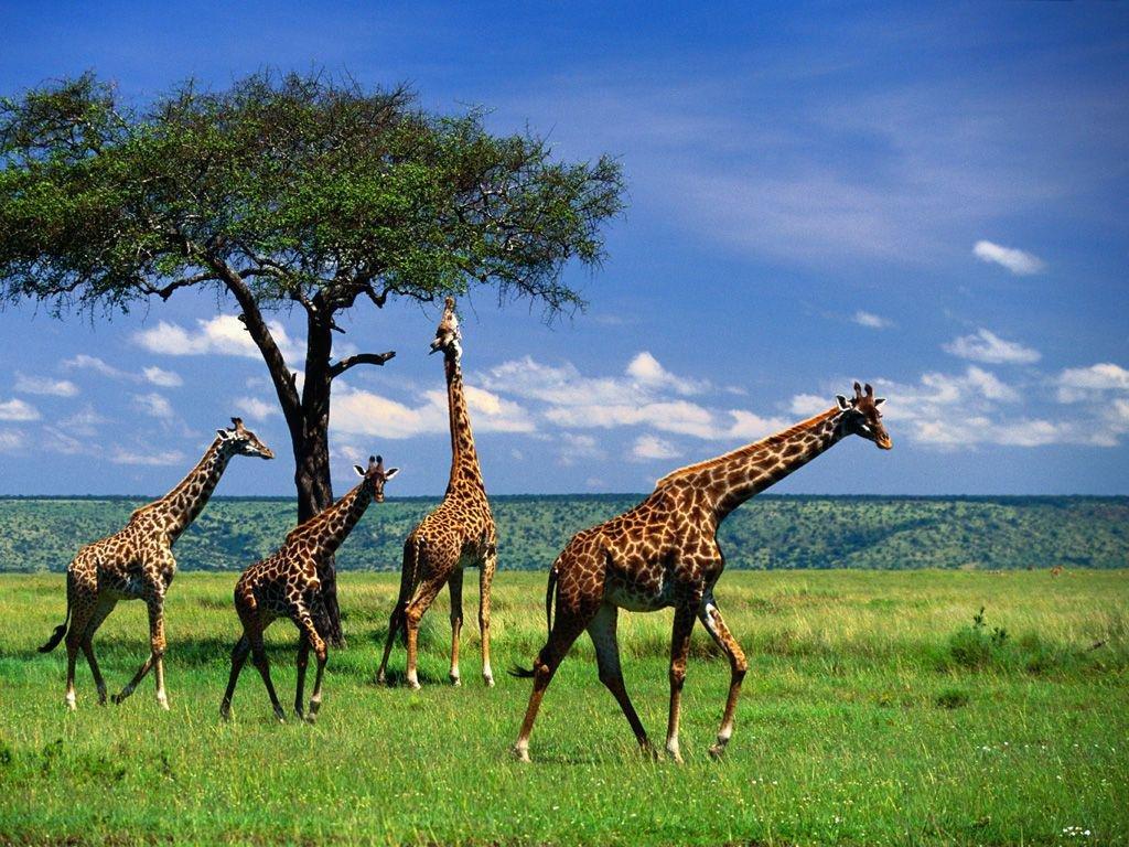 Тест: Угадайте факты о животных