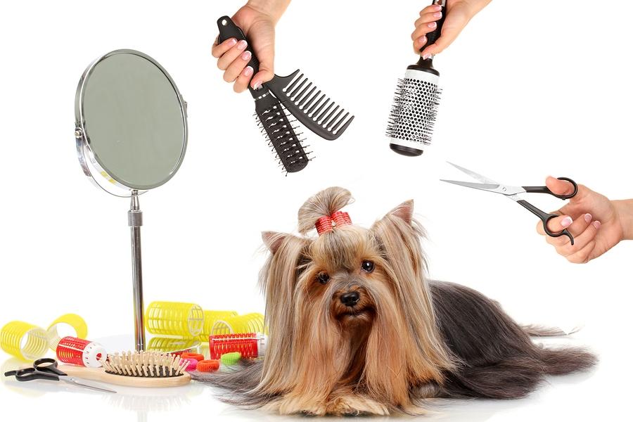 Как ухаживать за шерстью собаки