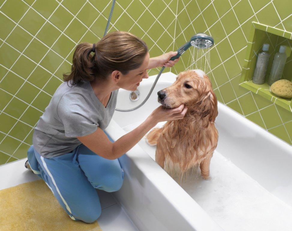 Как правильно мыть собак