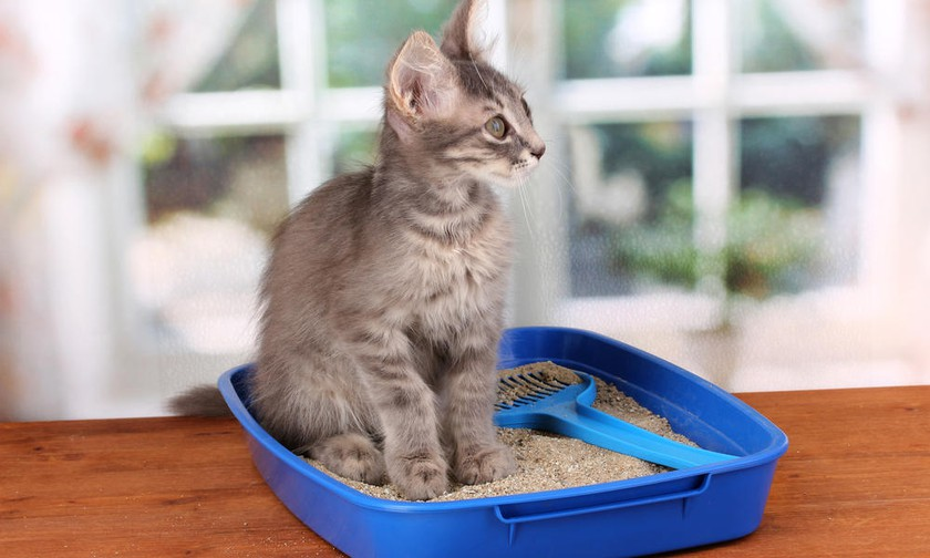 Выбор наполнителя в кошачий туалет: 7 вещей, которые нужно учитывать