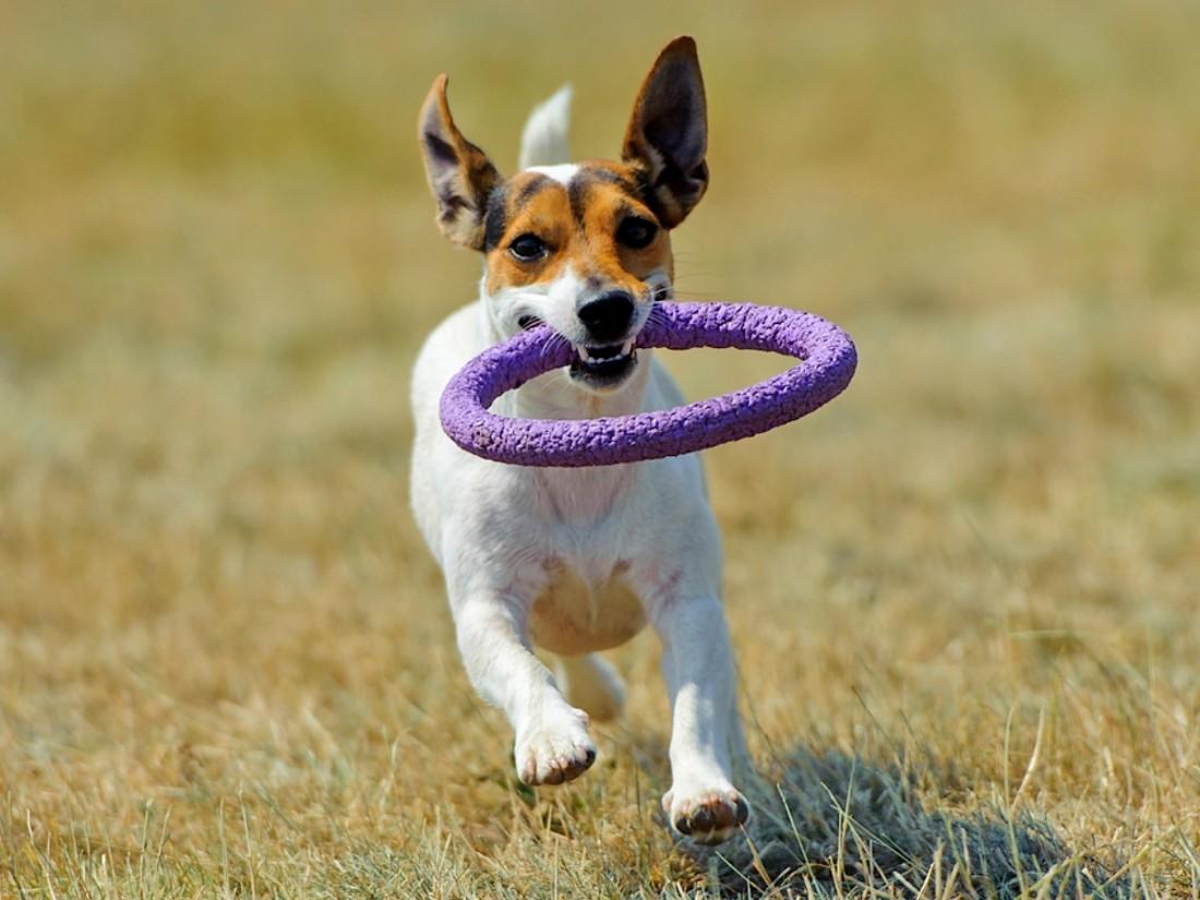На заметку хозяину новичку: типичные проблемы содержания домашней собаки