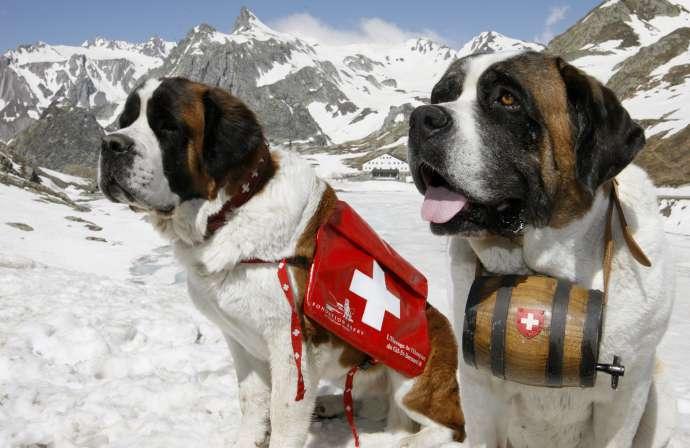 Какие профессии собак самые распространенные