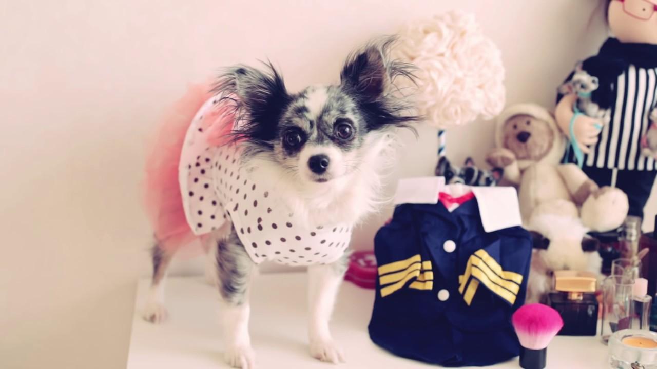 Как снимать мерки с котов и собак для покупки одежды