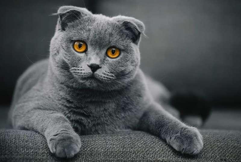 Какие породы кошек чаще всего покупают россияне