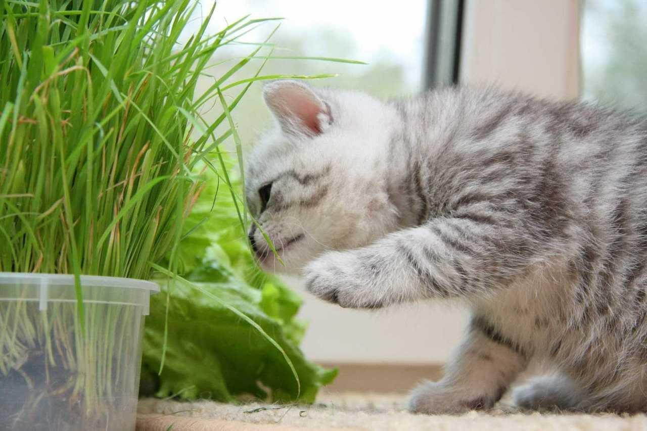 Советы, которые помогут обезопасить пребывание котенка в квартире