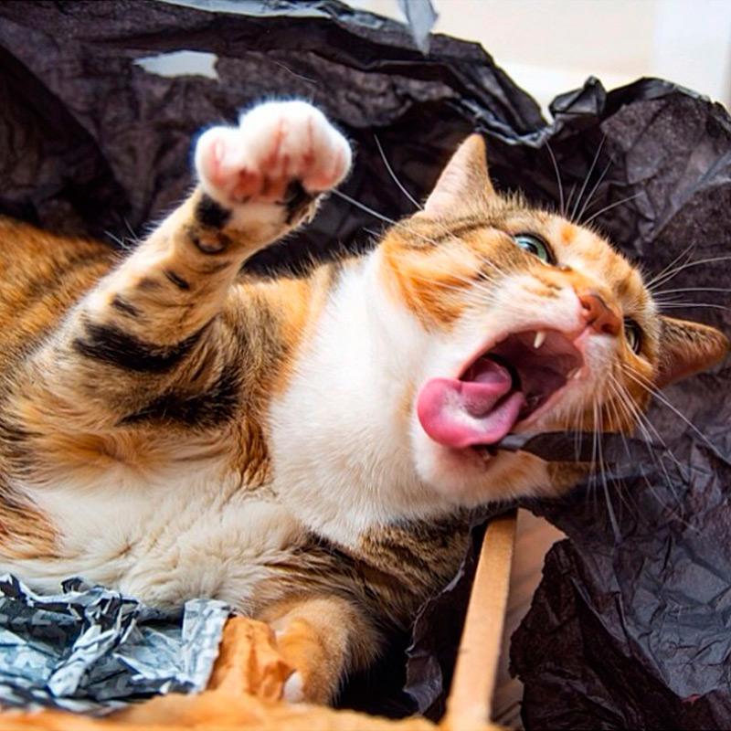 Айлурофобия, или патологическая боязнь домашних кошек
