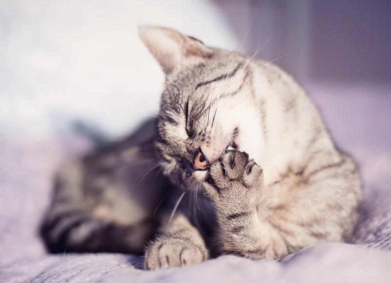 Топ-5 признаков того, что ваш кот обделен вниманием