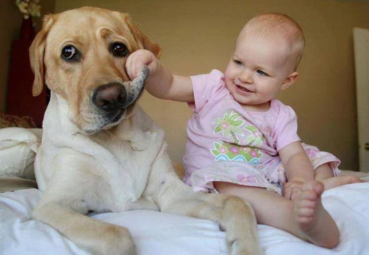 Важные 7 причин подарить своему ребёнку собаку на ближайший праздник