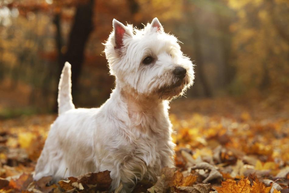 Рейтинг самых популярных пород собак в России