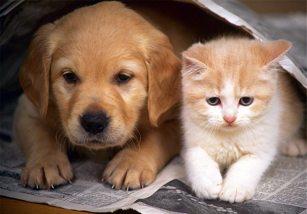 Топ-10 фактов и мифов о родах собак и кошек