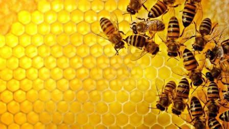 Многое в жизни пчел еще является загадкой для человека