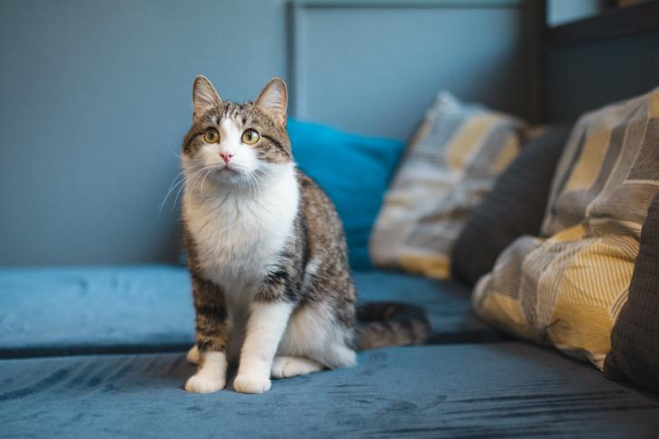 Уличный кот стал домашним: о чем надо позаботиться в первую очередь