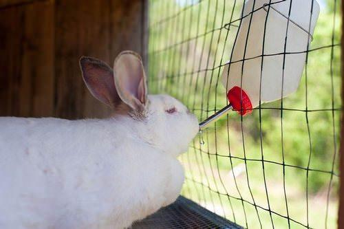 Обязательным условием правильного содержания кроликов является грамотный подбор оборудования в клетку