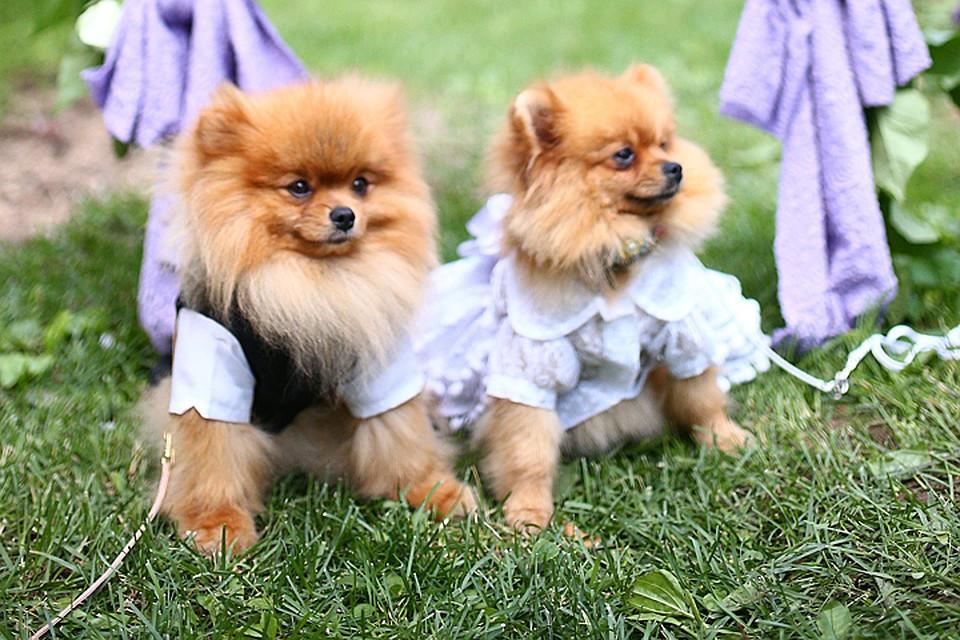Топ 10 самых известных собак, которые попали на страницы истории