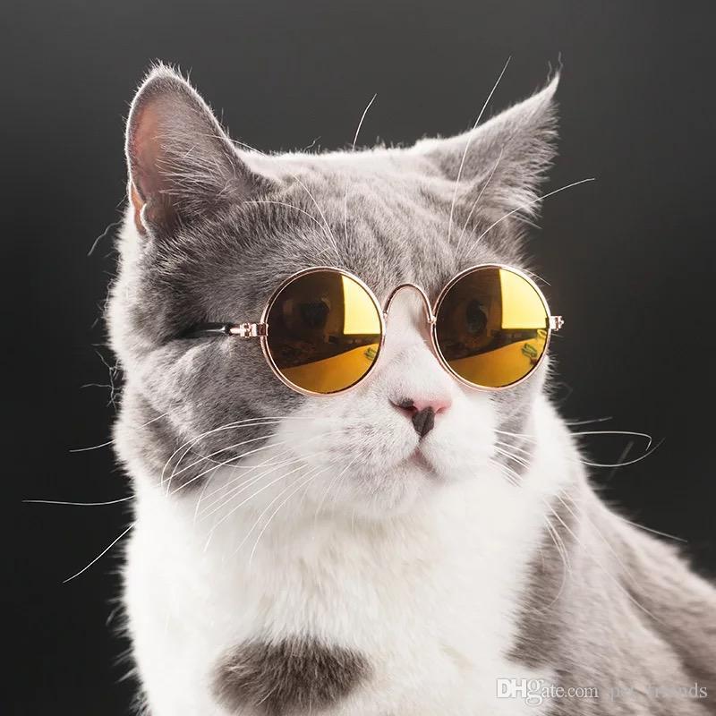 Топ-10 модных аксессуаров для кошек