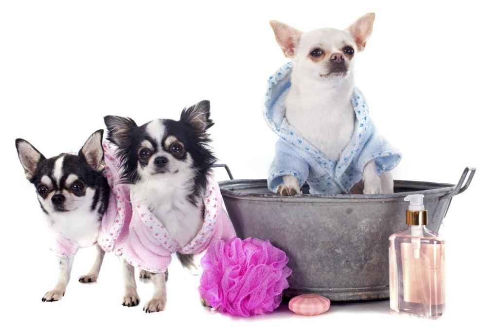Что в косметичке у собачки: 5 обязательных средств по уходу