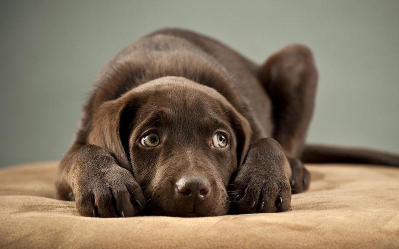 Топ 5 методов профилактики простудных заболеваний у собак