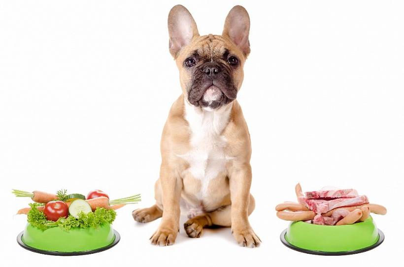 Необходимы ли морепродукты в рационе собаки