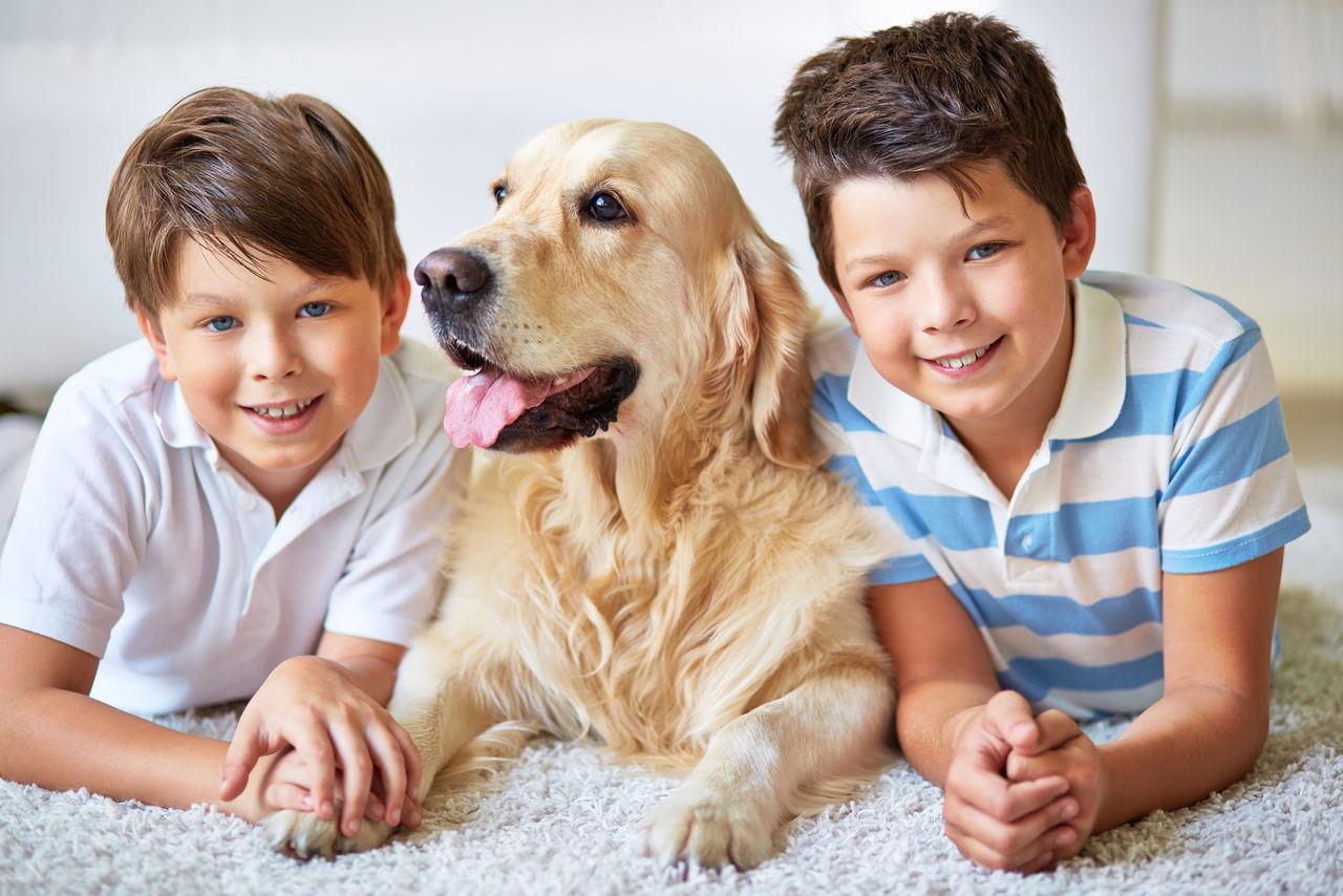 Как правильно ухаживать за большой собакой