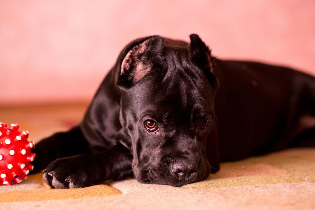 Распространенные собачьи версии человеческих заболеваний