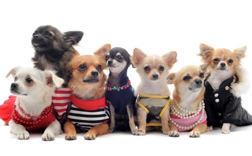 Советы опытных собаководов по выбору одежды для собак