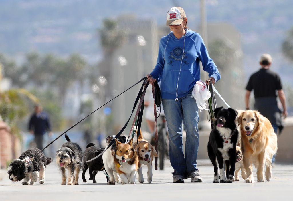 Выгуливаем собаку правильно: новые основные положения закона УК РФ