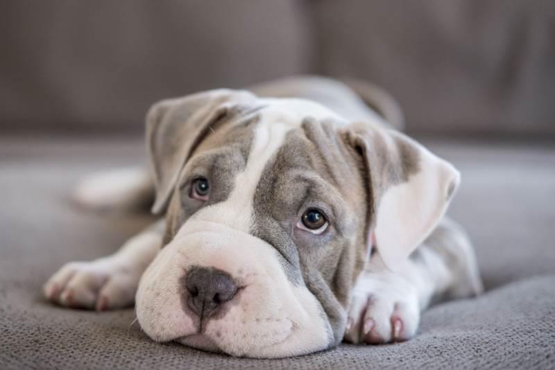Способы диагностирования и лечения кожных заболеваний у собак