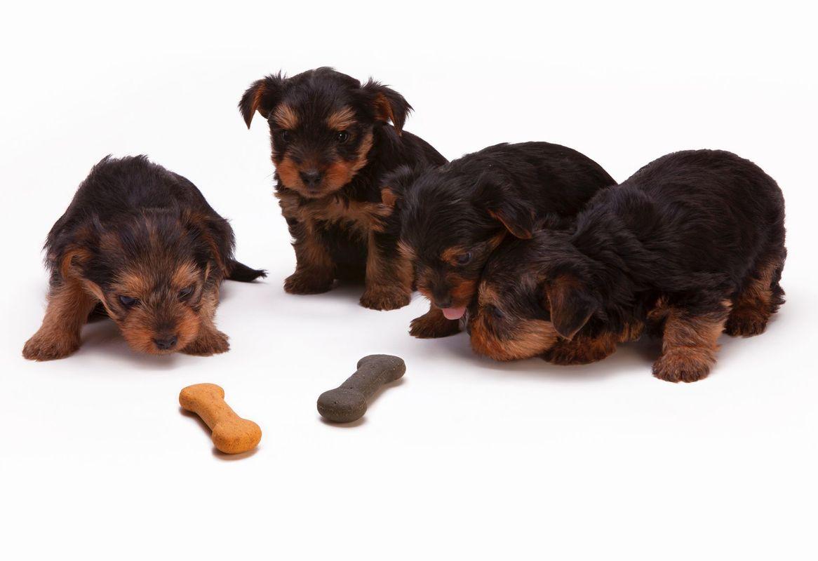 Советы специалистов по поводу лакомств для собак