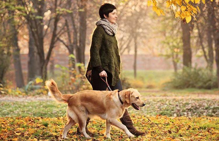 Что нужно знать хозяевам: 10 правил выгула крупных собак