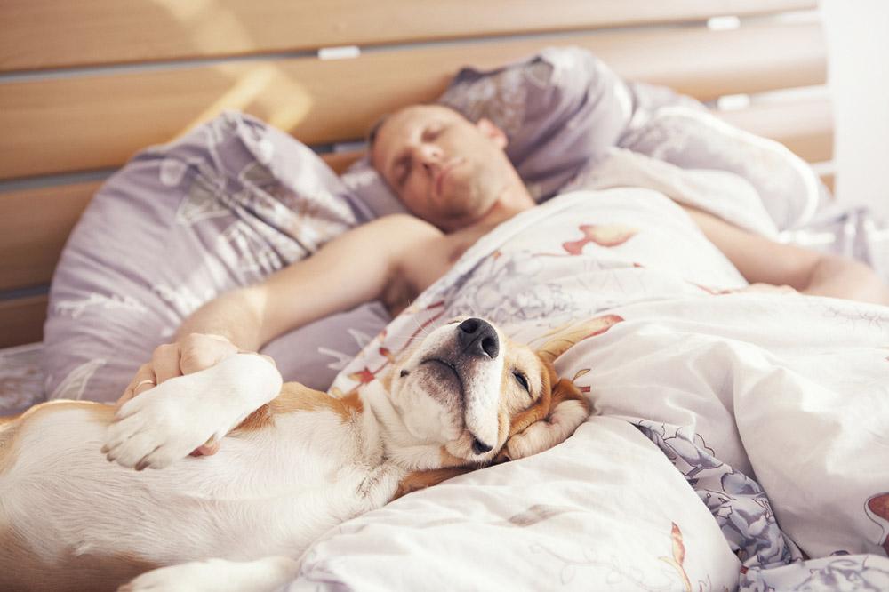 Почему спать с животным в одной постели опасно?