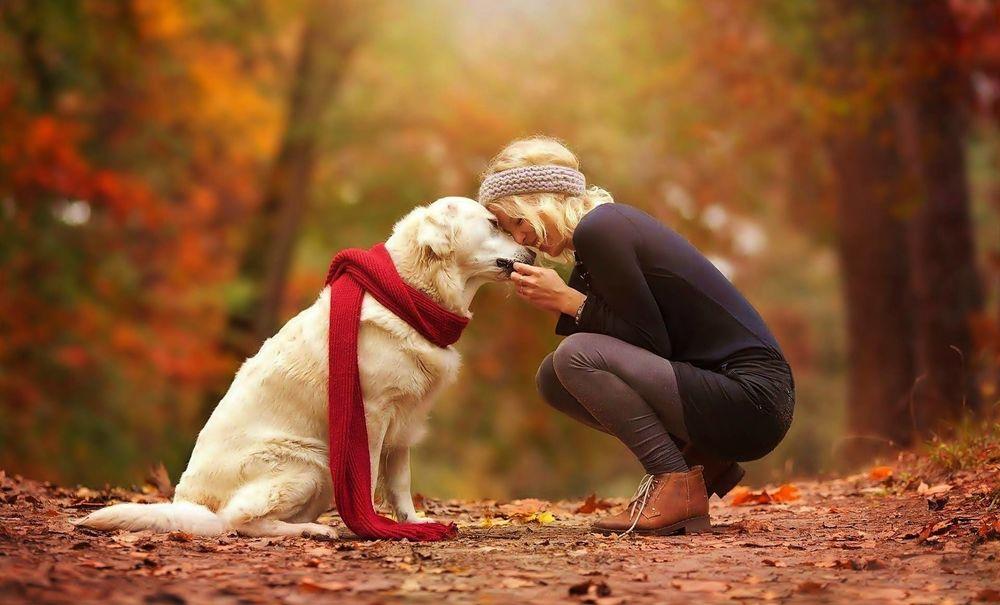 Самый послушный пес: Как наладить отношения с питомцем?