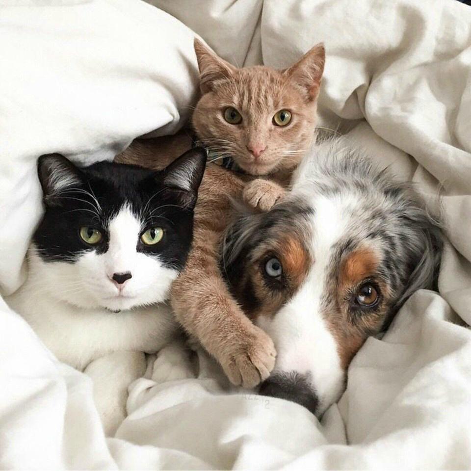 Как кошка с собакой: Как подружить питомцев?